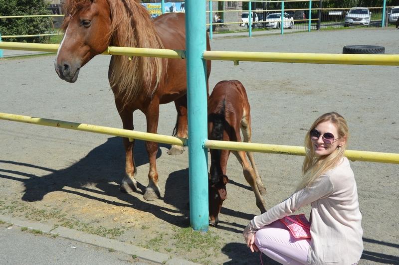 фото с лошадями