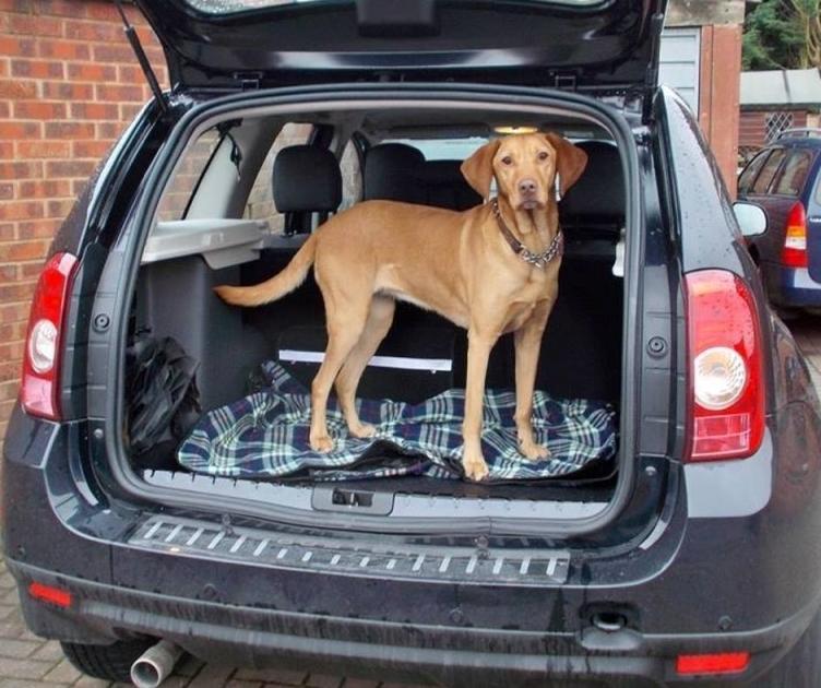собака в багажнике рено дастер